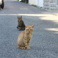 gato 1s